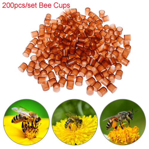 200Pcs//Lot Beekeeping Tools Queen Cell Brown Bee Cups Feeding Tools Apiculture