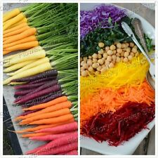 Colorful 200 Rainbow carrot Seeds Absolutely unique Free Shipping 1