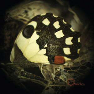 Ossicles-Music-for-Wastelands-VINYL-12-034-Album-2016-NEW-Amazing-Value