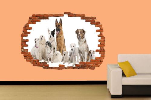 Pegatina fondo blanco Perros En Decoración De Habitación Calcomanía Mural una clase