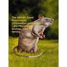 The African Giant/Pouched Rat (Cricetomys Gambianus) - It's Physiology, Ecology, Care & Taming by Ross Gordon Cooper (Paperback, 2014)