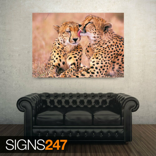 SOUTH AFRICAN CHEETAHS Animal Poster Poster Print Art A0 A1 A2 A3 A4 3395