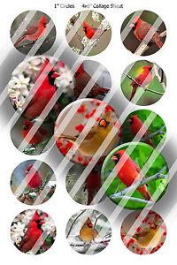 Pre-Cut-Bottle-Cap-Images-Cardinals-Collage-Sheet-R385-1-Inch-Circles