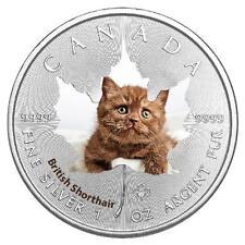 1 Oz Silber Maple Leaf Farbe 2017  Cute Kittens Britische Kurzhaarkatze Cat Katz