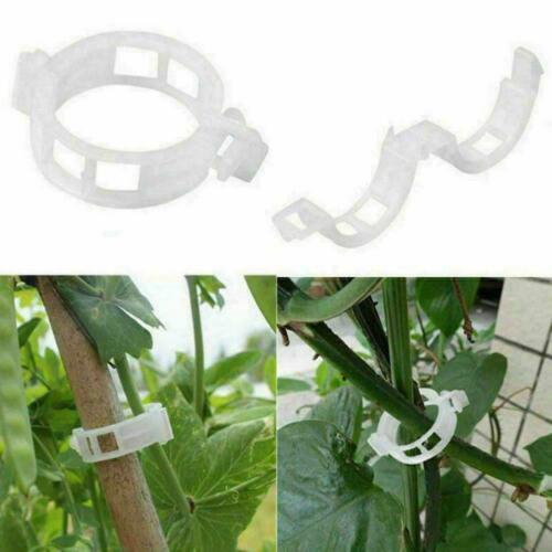 10//20//50x Invisible Climbing Wall Sticky Hook Fixing Vines Fixture S0U0