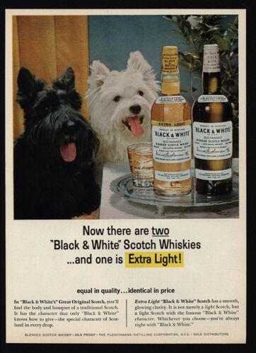 BLACK /& WHITE Scotch Whisky VINTAGE AD 1965 Cute SCOTTISH TERRIER /& WESTIE Dogs