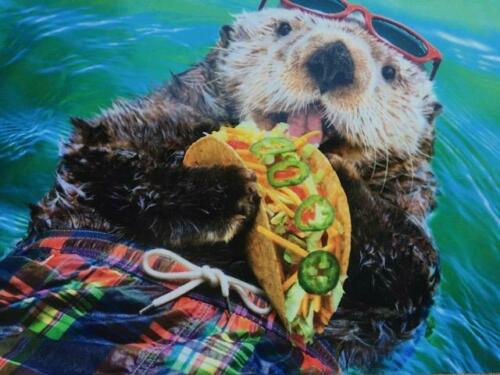 "/""It/'s Taco Tuesday Somewhere/"" Pop-Up Birthday Card AVANTI Funny Otter"