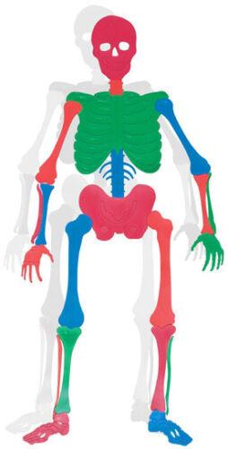 7 ft environ 2.13 m Vinyl OS Puzzle Set activité d/'apprentissage du squelette Thérapie Squelette scolaire