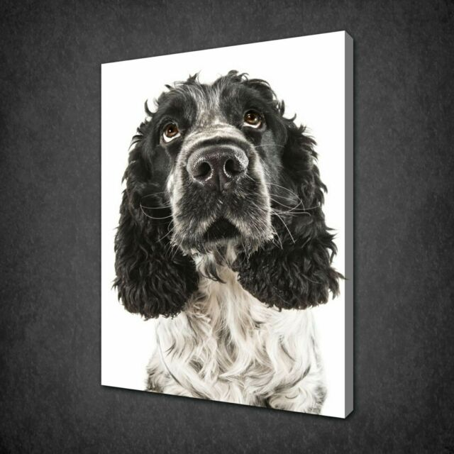 ENGLISH COCKER SPANIEL DOG MODERN CANVAS PRINT PICTURE READY TO HANG