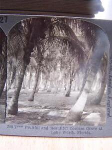 Stereoscope-Coconut-Grove-Lake-Worth-Florida