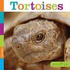 Tortoises by Kate Riggs (Hardback, 2016)