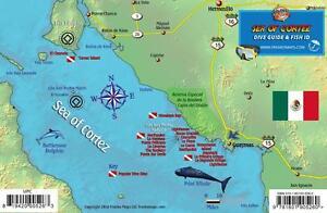 Sea Of Cortez Map Central Sea of Cortez San Carlos Baja Dive Map Fish Card  Sea Of Cortez Map