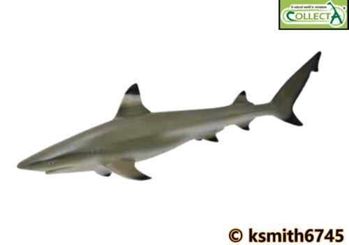 CollectA limbatus Reef Squalo in plastica giocattolo Wild Zoo Animale Pesce Mare Oceano NUOVO