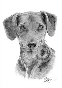 Dog Dachshund Pencil Drawing Art A4 Size By Uk Artist Pet Portrait