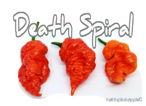 25+ Death Spiral Pepper Seeds