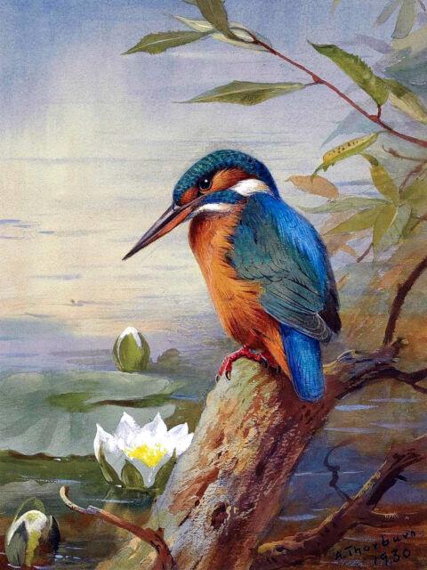 6 x 8 Bird Archibald Thorburn Ceramic Mural Backsplash Bath Tile #2236
