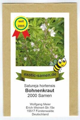 Satureja hortensis Bohnenkraut 100+ Samen DUFTIG und FEIN!