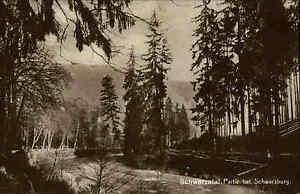 Schwarzatal-in-Turingia-S-W-AK-1920-30-foresta-partita-presso-Schwarzburg-botanica