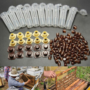 10X-Beekeeping-Rearing-Cup-Kit-Queen-Bee-Cages-Beekeeper-Tool-amp-100x-Cell-Cup