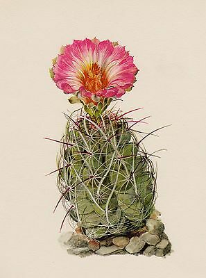 Cactus Print Vintage Botanical Print Beautiful Art Straw Spine Cactus #2027