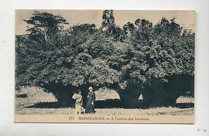 Carte-postale-MADAGASCAR-A-l-039-ombre-des-bambous
