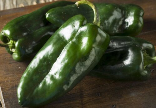 FREE SHIPPING Ancho Poblano Chile Pepper Seeds NON-GMO Variety Sizes Chili