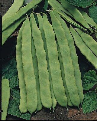 Vegetable - Climbing French Bean -  Hunter - 80 Seeds