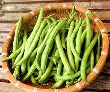 Dwarf French Bean Spirit - 200 seeds - Disease resistant - Vegetables