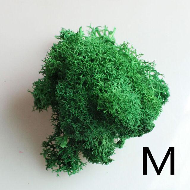 Landscape Flowers Moss Artificial Dry Micro Plant Home Garden Decor