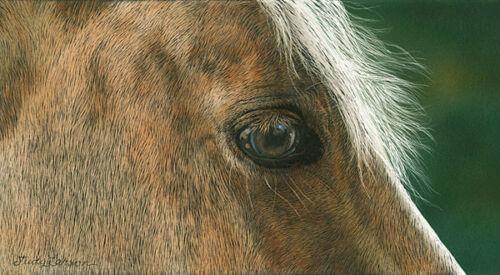"/""Golden/"" Judy Larson Smallwork Horse Fine Art Giclee Canvas"