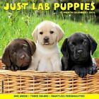 2017 Just Lab Puppies Wall Calendar by Willow Creek Press 9781682341322