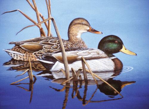 Malen nach Zahlen Enten am See Tiermotiv Komplettset Malen nach Zahlen