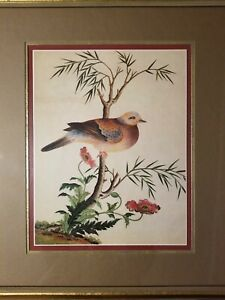 Framed-Matted-Vintage-Bird-Print