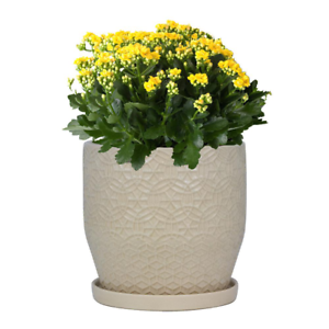 Planter-Pot-w-Saucer-Plant-Flower-Indoor-Outdoor-Garden-Ceramic-10-034-or-12-034