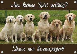 Bouclier pour chien Golden Retriever - 7 Bouclier de qualité Goldies 1a