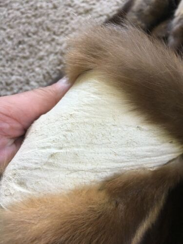 XL Marten Sable Pelts Tanned Top Quality Wild Country Furs
