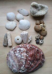 Mixed-Sea-Shells-amp-Dead-Coral-Lead-Sinkers-Pebbles-Crafting-Aquariums-No1