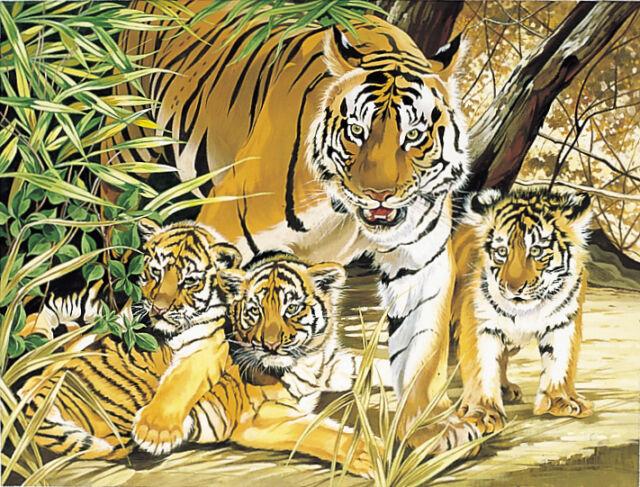 Malen nach Zahlen - Tiger Babys - Afrika  -  Größe 30 cm x 40 cm -  NEU + OVP