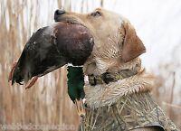 Avery Sporting Dog Greenhead Gear Large L Collar Killer Weed Kw Camo Dog Leash