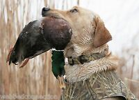 Avery Sporting Dog Greenhead Gear Large L Collar Killer Weed Kw Camo Dog Leash