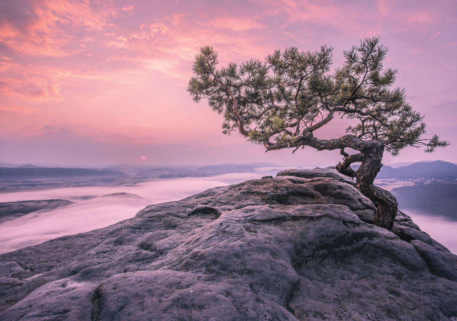 VLIES Fototapete-BAUM FELSEN-(11749)-Wolken Himmel Sonne Berge Skyline Mural XXL
