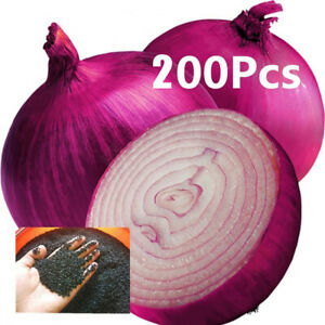Am-200Pcs-Giant-Red-Onion-Shallot-Seeds-Sterilization-Vegetables-Plants-Home-De