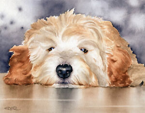 goldendoodle dog 8x10 art print poster watercolor painting