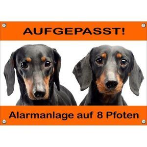 Bouclier de chien exclusif - 2 Teckel à poil court Schwarzloh Uvbeständig