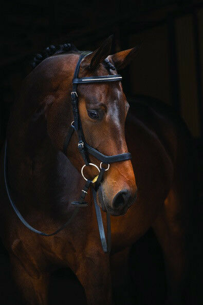 Horseware Rambo micklem competition diamante negro turnierzaum  frenillo logran contener Top  elige tu favorito