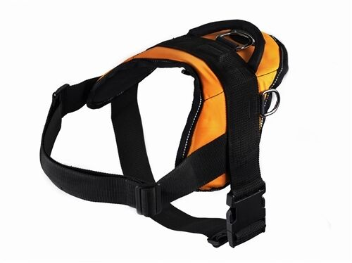 Dean & Tyler     DT Harness arancia   Nylon Dog Harness 89e803