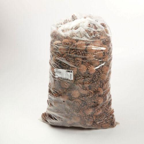 Pommes de pin (Austriaca cônes) 10 kg sac Floral Décoration de Noël événements Oasis