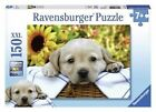Ravensburger BRAND 150pc Puzzle - Puppy Picnic in Shrink