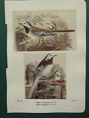 Modellflugzeuge Sincere Vintage Vogel Aufdruck ~ Weiß Bachstelze ~ Pied Bachstelze