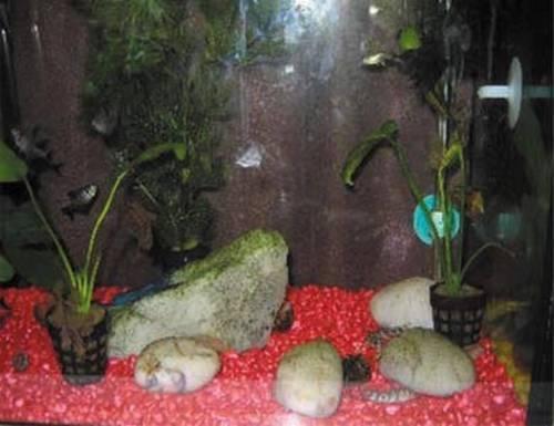 500g Pierres de Couleur Fish Tank Aquarium Mariage Décoration d.green gravier ru6-19